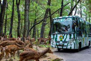Bekeliling-Taman-Safari-Prigen