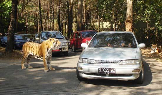 taman-safari bogor