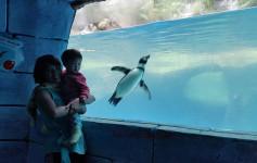 kandang-pinguin-taman-safari2