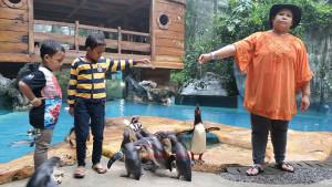 kandang-pinguin-taman-safari4