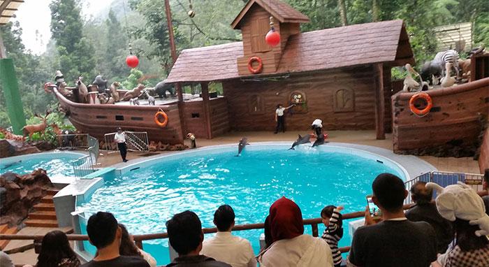 taman-safari-lumba-lumba