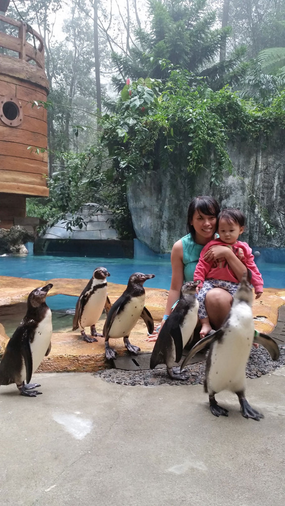 taman-safari-pinguin