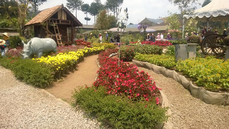 kebun begonia lembang1