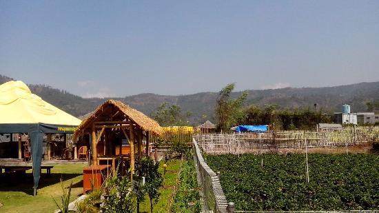 purnama-hotel kebun stroberi