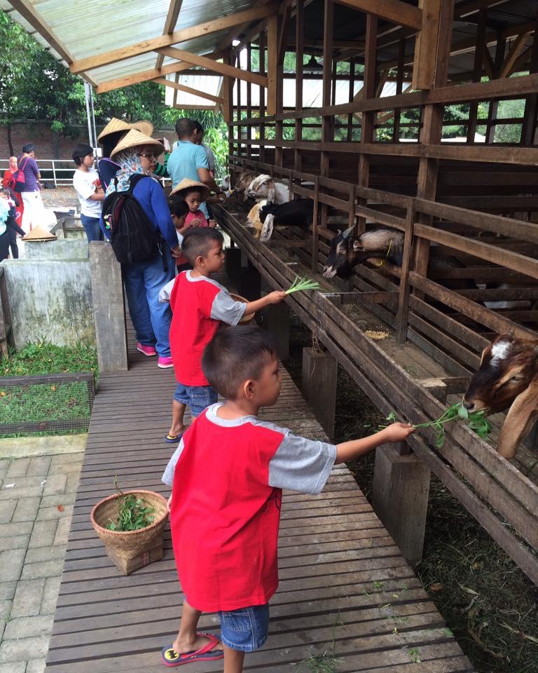 kuntum farm filed bogor