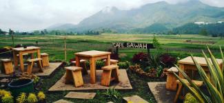 cafe-sawah-pujon
