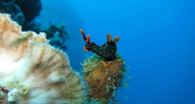 5_spot_snorkeling_sulawesi_pic_1