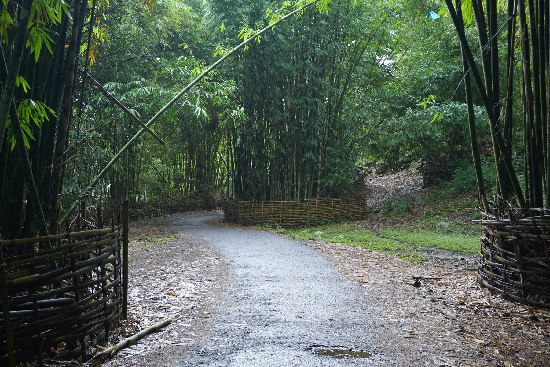 Bukit Selong