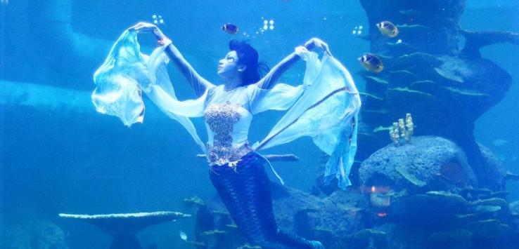 520 Koleksi Gambar Hewan Laut Beserta Namanya Terbaik