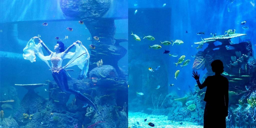 jakarta-aquarium-3
