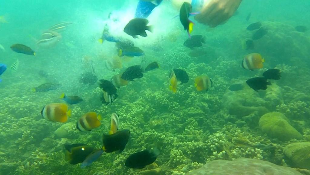 snorkeling-di-gili-kedis-2