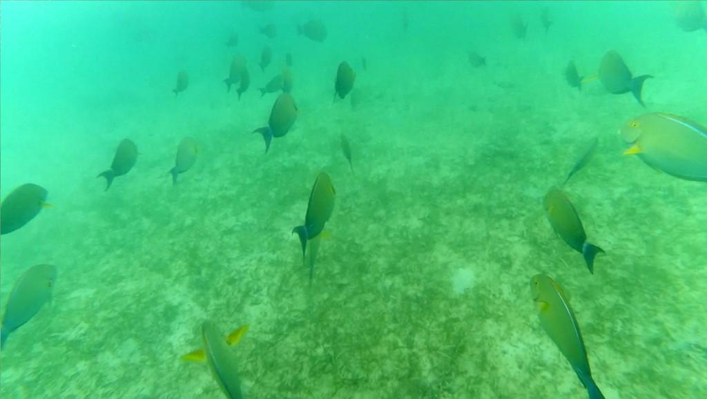 snorkeling-di-gili-kedis-3