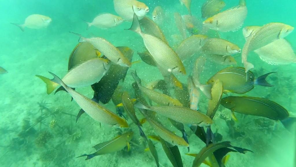 snorkeling-ikan-di-gili-nanggu