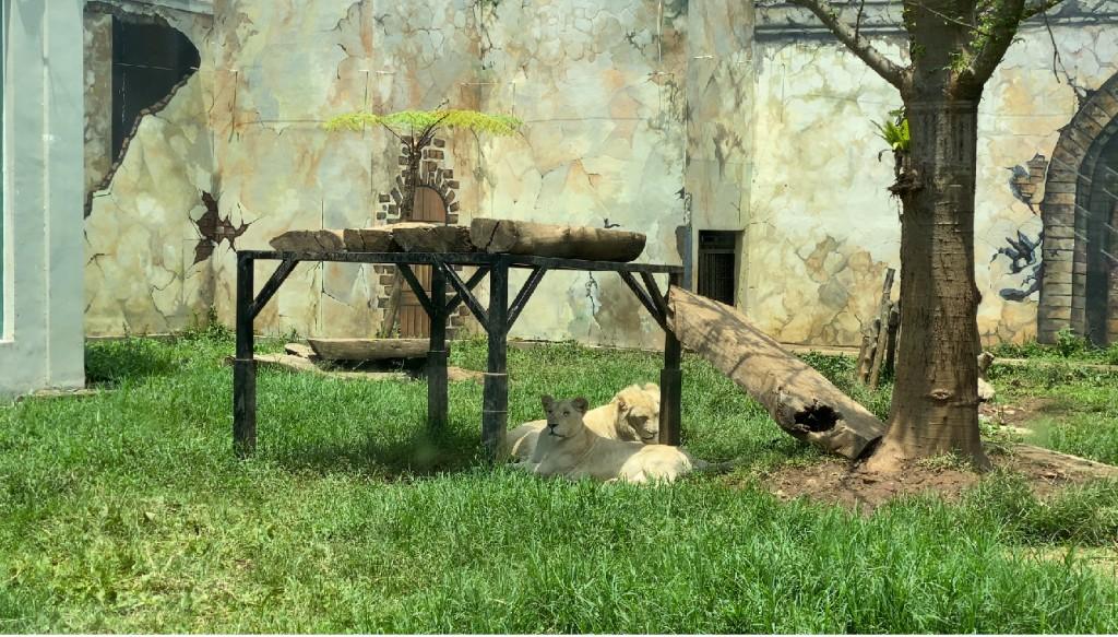lion-di-lembang-park-and-zoo