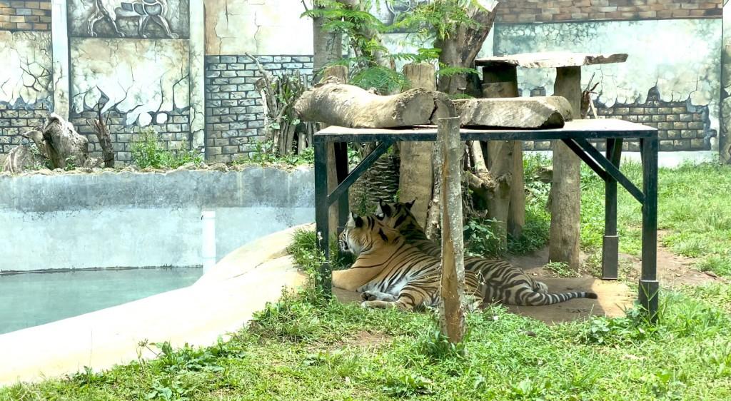 macan-di-lembang-park-and-zoo